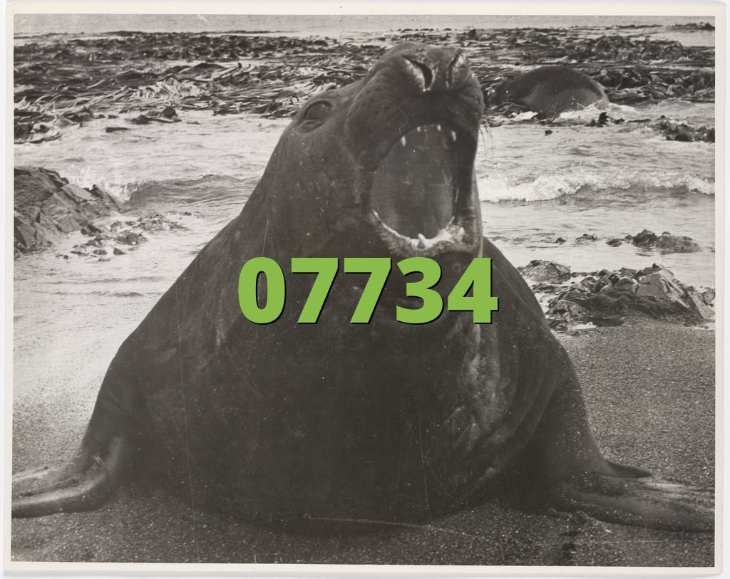 07734