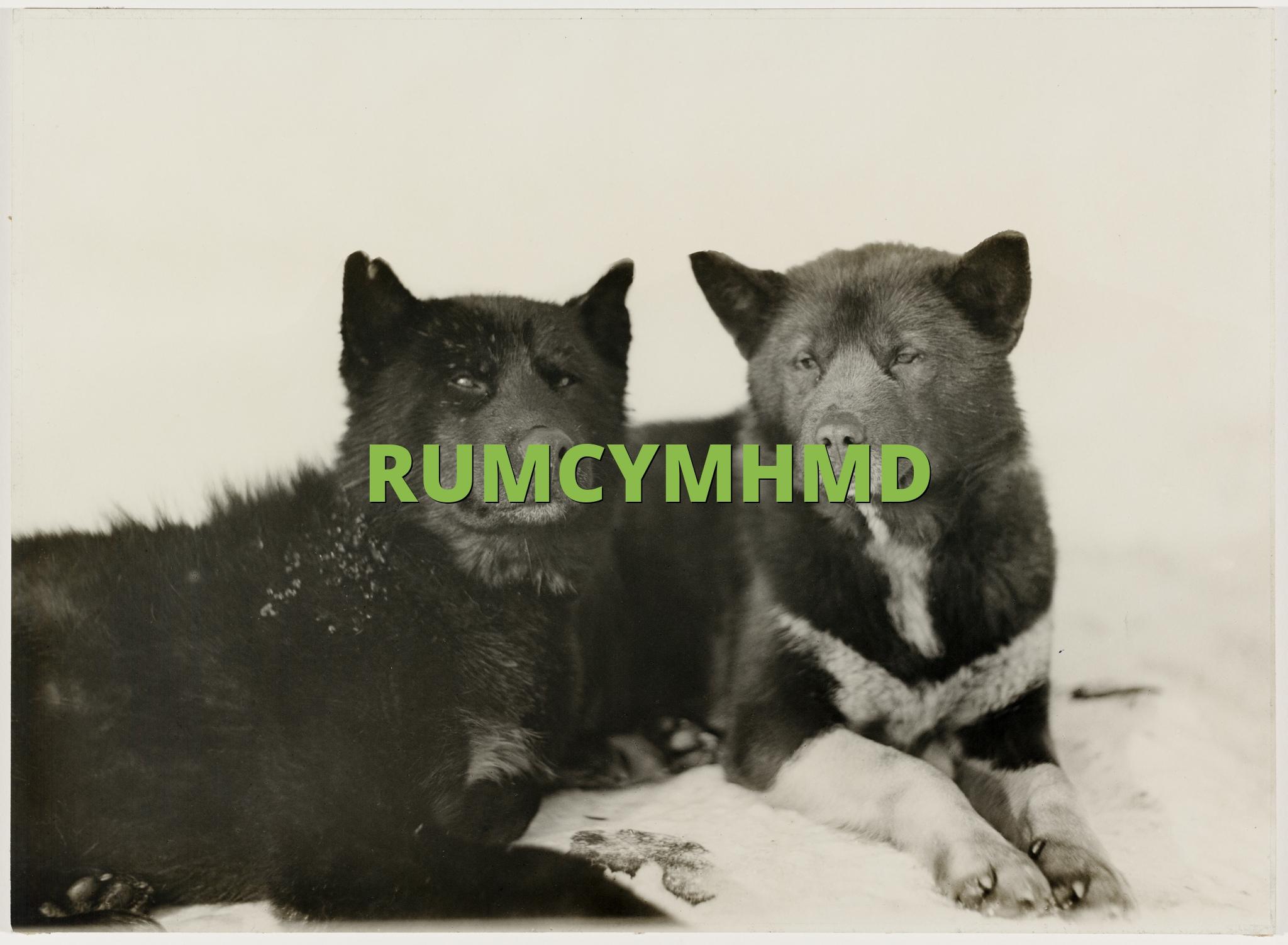 RUMCYMHMD