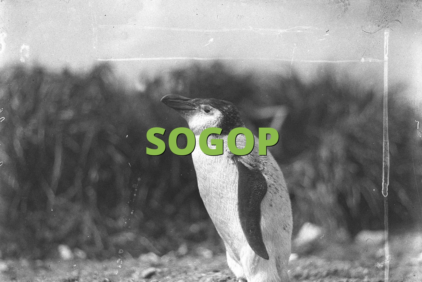 SOGOP