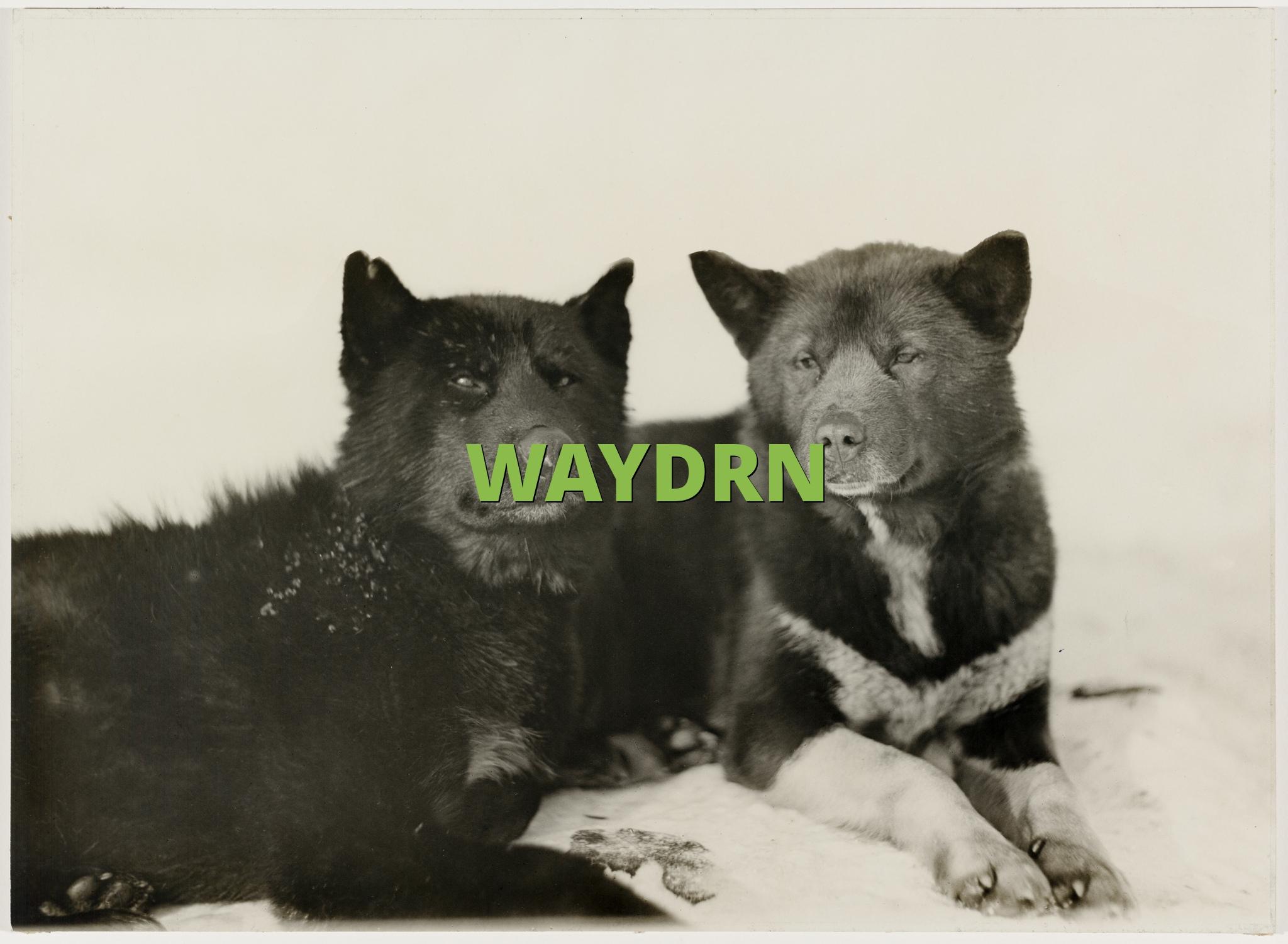 WAYDRN