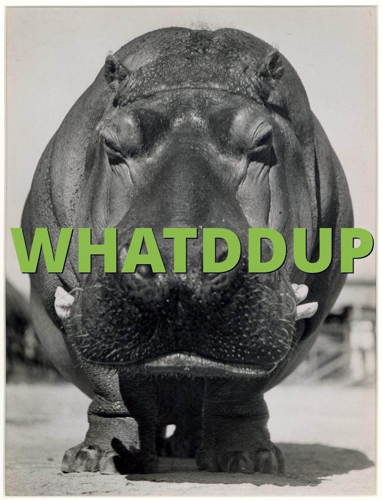 WHATDDUP