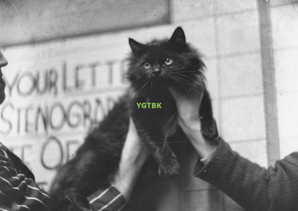 YGTBK